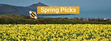 Spring Picks
